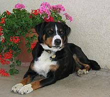 Mutterhund Anina